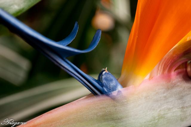 flower, floral. flora, plant, nature, garden, botanical, botany